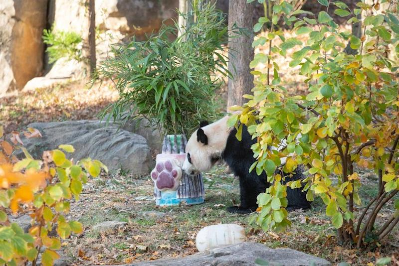 Bei Bei | Smithsonian's National Zoo