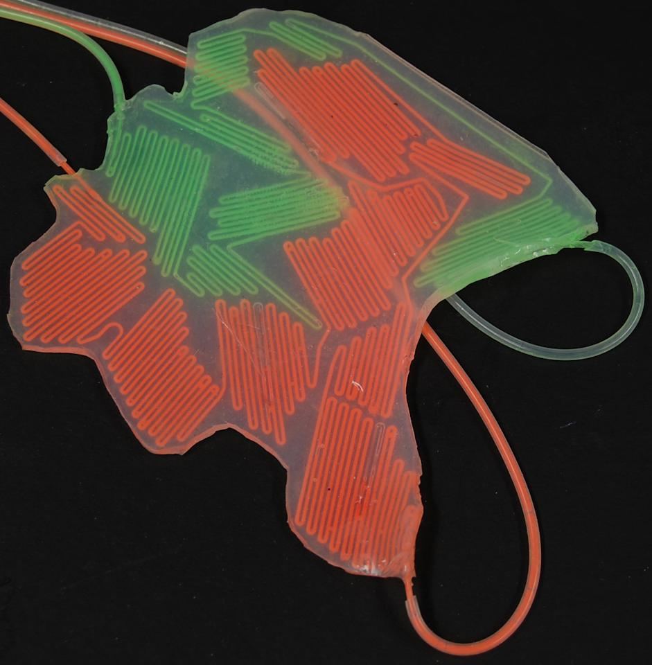 A color layer used in the camouflage and display of soft robots. The microchannels are filled with fluorescent dyes. (Photo courtesy of S. Morin/Harvard University)