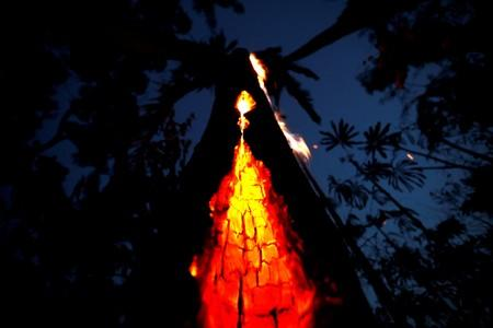 A burning tree is seen during a fire in an area of the Amazon rainforest in Itapua do Oeste