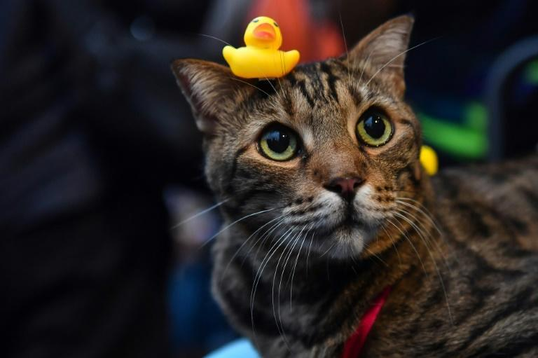 Rubber ducks have become a symbol of Thailand's pro-democracy movement