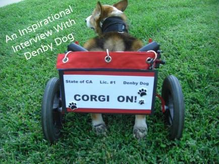 "<div class=""caption-credit"">Photo by: Denby Dog</div><div class=""caption-title"">Interviewing Denby</div>Denby is a 12-year-old corgi living in California. This is his story. Please be sure to follow him on his <a rel=""nofollow"" href=""https://www.facebook.com/pages/Denby-Dog/117652754970902"" target="""">Facebook page</a> for more photos and information. <br> <i>Photo source: <a rel=""nofollow"" href=""https://www.facebook.com/pages/Denby-Dog/117652754970902"" target="""">Denby Dog</a></i> <br> <b><i><a rel=""nofollow"" href=""http://www.babble.com/pets/10-good-reasons-to-love-a-corgi/smile-through-any-troubles/?cmp=ELP