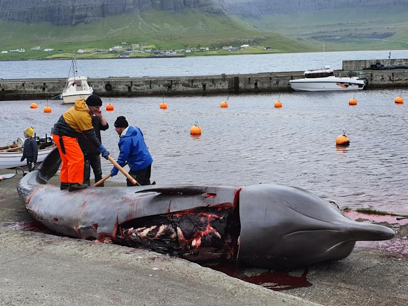 Five northern bottlenose whales were butchered on Wednesday. Source: Sea Shepherd