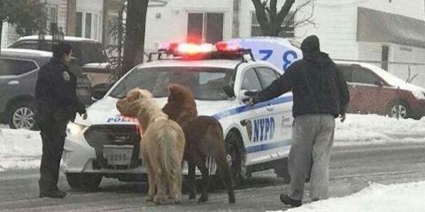 Photo credit: Twitter + NYPD Special Ops