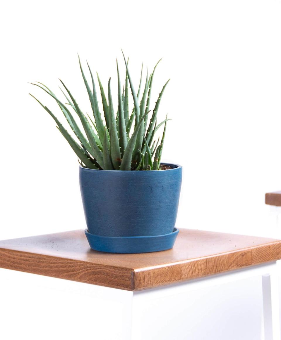 """<h3><h2>Hedgehog Aloe</h2></h3><br><strong>Why She'll Love It</strong><br>Beauty and wellness-loving moms will adore this fruitful aloe plant in its chic midnight-blue pot.<br><br><strong>Care</strong><br>A famously easy-to-care-for plant that needs bright or indirect sunlight in moderate temps with watering when soil is dry to the touch.<br><br><em>Shop</em><strong><em> <a href=""""https://bloomscape.com/shop/mothers-day-shop/"""" rel=""""nofollow noopener"""" target=""""_blank"""" data-ylk=""""slk:Bloomscape"""" class=""""link rapid-noclick-resp"""">Bloomscape</a></em></strong><br><br><strong>Bloomscape</strong> Hedgehog Aloe Plant, $, available at <a href=""""https://go.skimresources.com/?id=30283X879131&url=https%3A%2F%2Fbloomscape.com%2Fproduct%2Fhedgehog-aloe%2F"""" rel=""""nofollow noopener"""" target=""""_blank"""" data-ylk=""""slk:Bloomscape"""" class=""""link rapid-noclick-resp"""">Bloomscape</a>"""