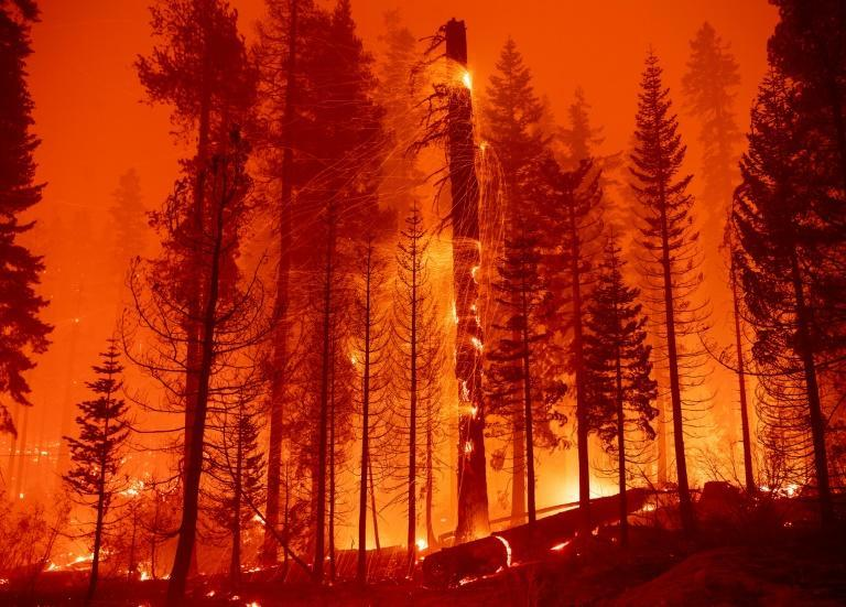 The magnificent forests of northern California are tinder-dry after a years-long drought (AFP/JOSH EDELSON)