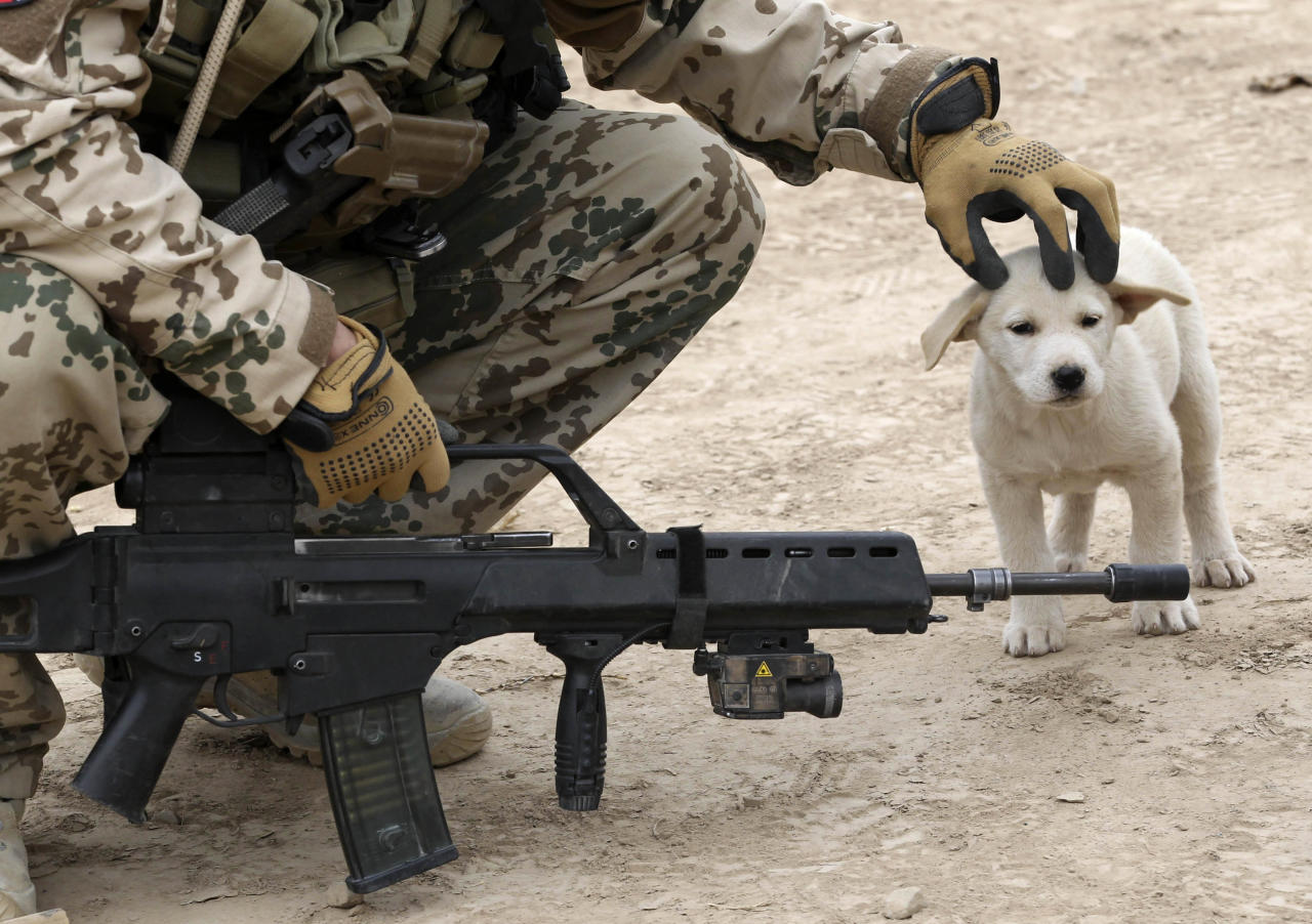 A German Bundeswehr army soldier with the Delta platoon of the 2nd paratroop company 373 strokes a dog on its head during a mission in the city of Iman Sahib, north of Kunduz, northern Afghanistan, December 6, 2010.   REUTERS/Fabrizio Bensch (AFGHANISTAN - Tags: MILITARY CONFLICT ANIMALS)
