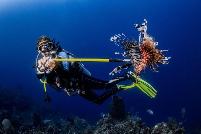 3rd Underwater Conservation_Stephanie_Doniger_Cindy vs. The Lionfish