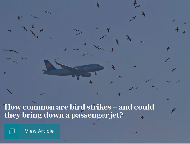 How common are bird strikes – and could they bring down a passenger jet?