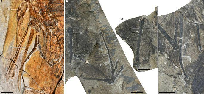 Photo credit: Min Wang, Institute of Vertebrate Paleontology and Paleoanthropology, Chinese Academy of Sciences