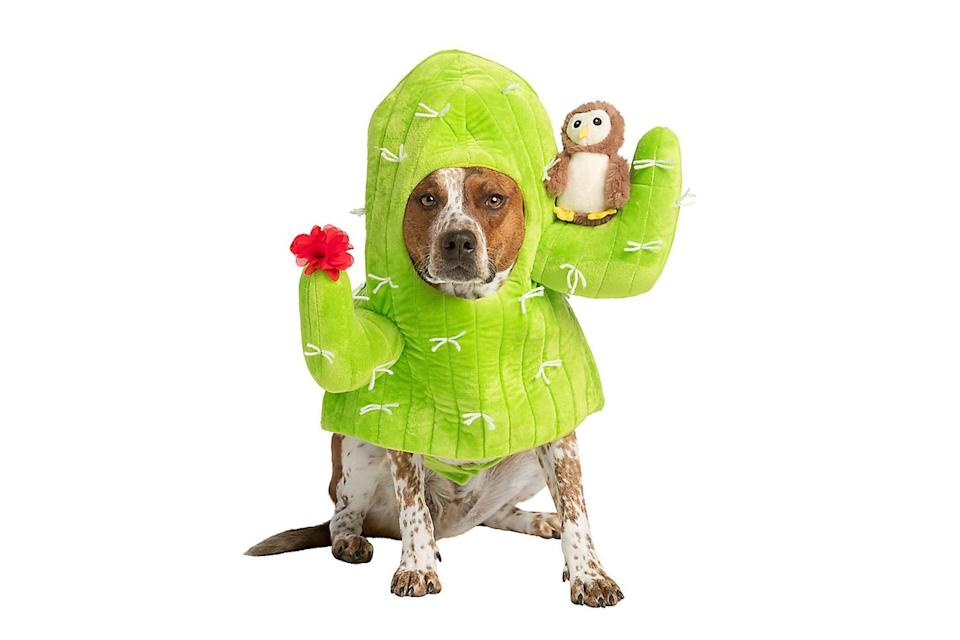 """<p>The ideal costume for pooches who prefer not to be touched by strangers. </p> <p><strong>Buy it!</strong> Cactus Dog Costume, $19.99; <a href=""""https://www.petsmart.com/featured-shops/halloween/thrills-and-chillsandtrade-halloween-cactus-dog-and-cat-costume-64284.html"""" rel=""""nofollow noopener"""" target=""""_blank"""" data-ylk=""""slk:PetSmart.com"""" class=""""link rapid-noclick-resp"""">PetSmart.com</a> </p>"""
