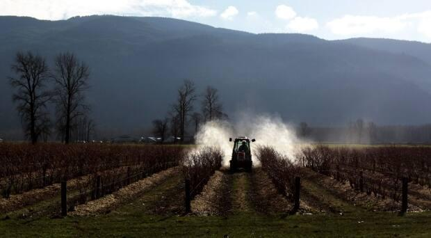 Quebec's law will be in line with France, where workers will have to prove direct exposure to pesticides through contact or inhalation for a period of at least 10 years. (Darryl Dyck/The Canadian Press - image credit)