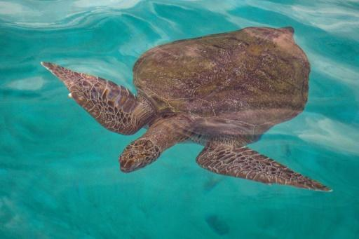 Authorities in the Malaysian state of Terengganu pledged to ban the trade in all turtle eggs by the end of this year, following sustained pressure from conservation groups