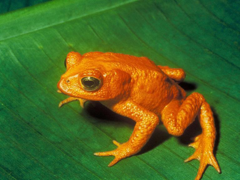 Frogs, salamanders and toads suffering 'catastrophic population decline', scientists say