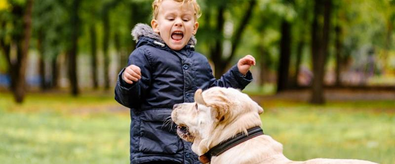 the child is afraid of the dog. Big dog scares a child in the park