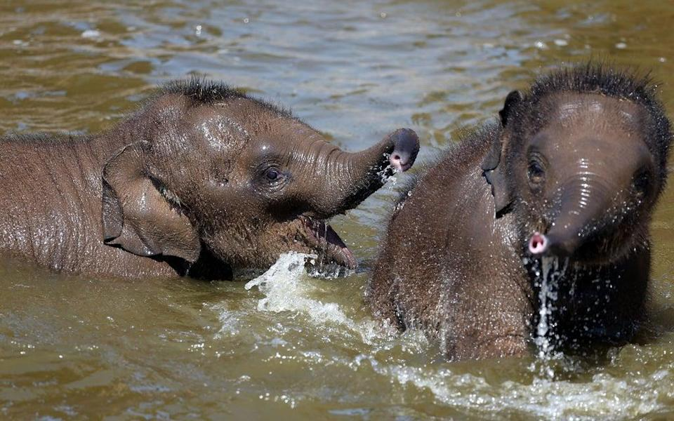 Older sisters better than older brothers for elephants, research suggests (Peter Byrne/PA) (PA Archive)