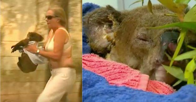 The effort by Toni Doherty to save Lewis the Koala went viral at the beginning of the fire season that has devastated vast swathes of Australia.