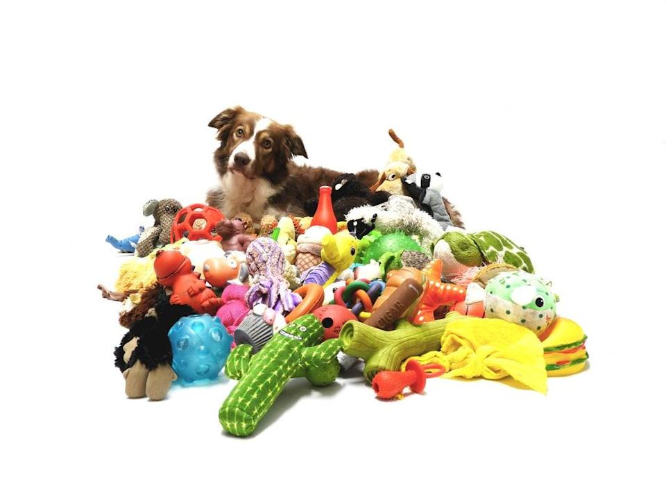 Gifted dogs able to remember names of a dozen toys (Sonja De Laat Spierings/PA)