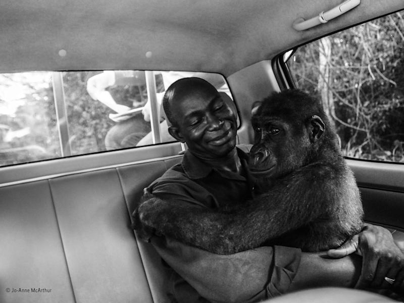 'Pikin and Appolinaire' winner of the Wildlife Photographer of the Year People's Choice Award: Jo-Anne McArthur