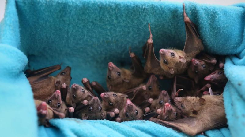 Ebola-like virus found in Chinese bats