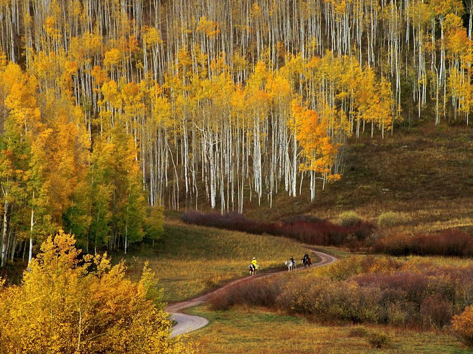 """Kebler Pass's claim to fame is that it's home to the biggest aspen grove in North America. Every fall, hikers and photographers take to Dyke Trail—a six-miler that meanders through the pass's sea of yellow and crosses the rocky ridge from which it takes its name. (You can also drive or <a href=""""https://www.cntraveler.com/story/best-bike-accessories-helmets?mbid=synd_yahoo_rss"""" rel=""""nofollow noopener"""" target=""""_blank"""" data-ylk=""""slk:bike"""" class=""""link rapid-noclick-resp"""">bike</a> if you'd prefer.)"""