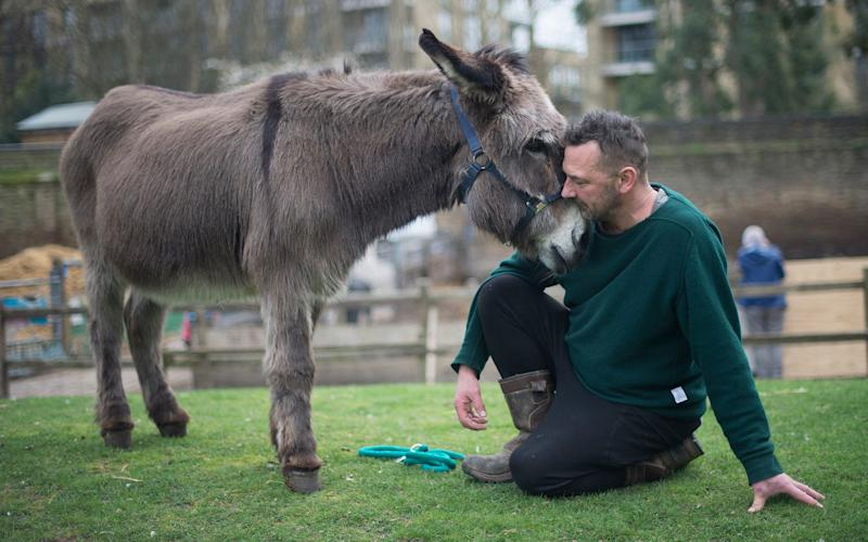 Larry with Hackney City Farm manager Chris Pounds - Credit: Eddie Mulholland/The Telegraph