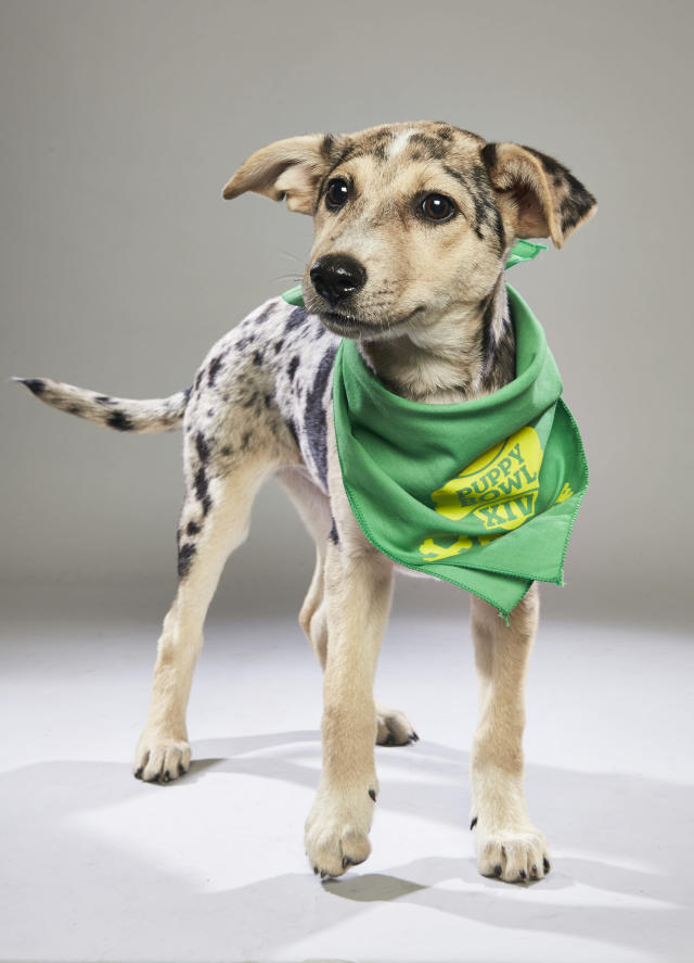 <p>Team: Ruff<br> From: Sebastian County Humane Services<br> (Photo: Animal Planet) </p>