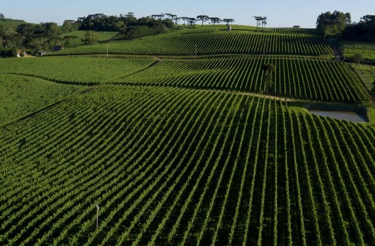An aerial view of the Familia Geisse vineyard in Brazil's Serra Gaucha region, which accounts for 90 percent of the country's wine production