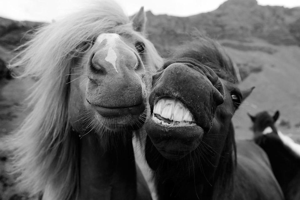 <p>Do we think these horse BFFs would be open to expanding the friend group to include a human?</p>