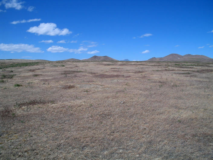 This 2004 photo provided by Bethany Bradley shows cheatgrass in Jungo, Nev. A new study finds that for much of the United States, invasive grass species, such as cheatgrass, are making wildfires more frequent, especially in fire-prone California. (Bethany Bradley/University of Massachusetts via AP)