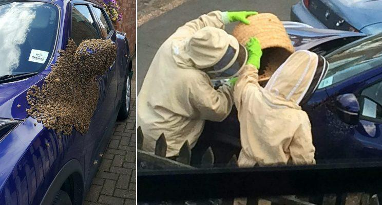 Bees wreak havoc in Hull as 20000 swarm auto