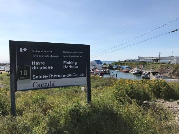 With snow crab season underway, a seafood transformer and exporter in the Gaspé is seriously understaffed with four dozen of its temporary foreign workers either testing positive for COVID-19 or in preventive isolation.  (Susan Campbell/CBC - image credit)
