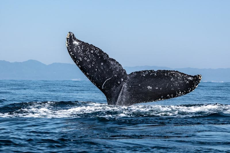 Drop in Bitcoin 'Whale' Addresses Suggests Market May Be Decentralizing