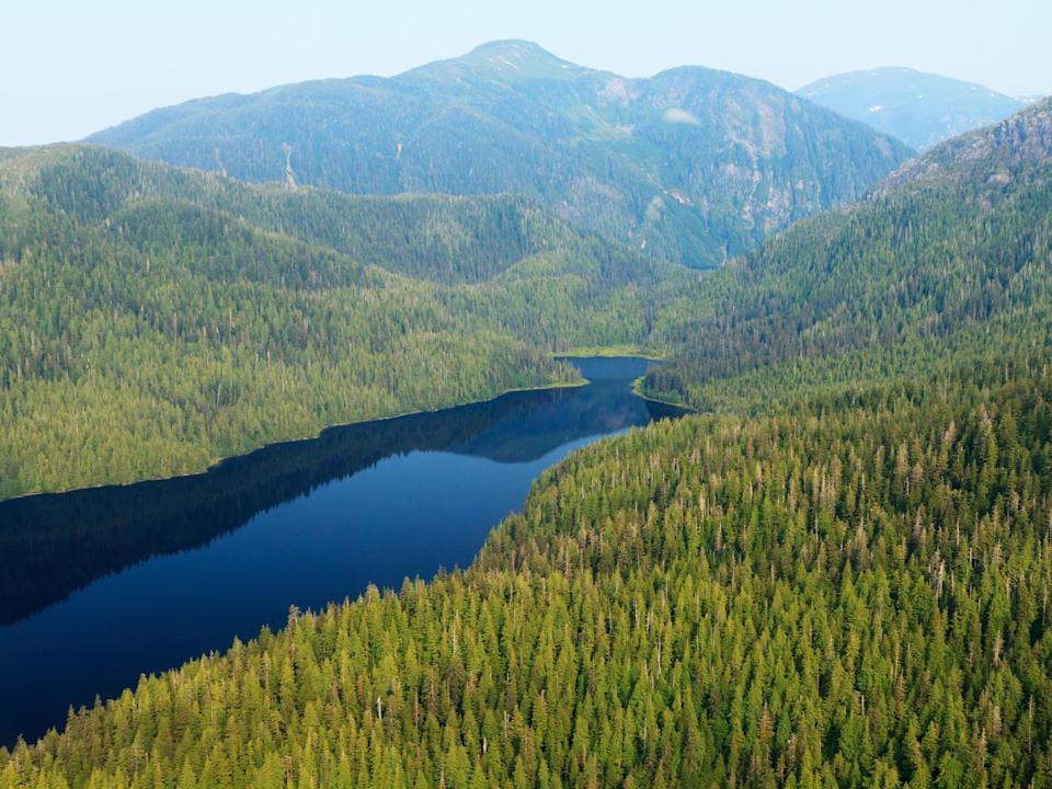 An aerial view of Tongass national forest in Alaska (Alan Wu)