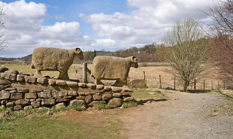 Stone sheep sculpture at Low Force, on the Teesdale Way.