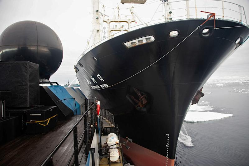 Japanese whaling ship, protesters' boats collide