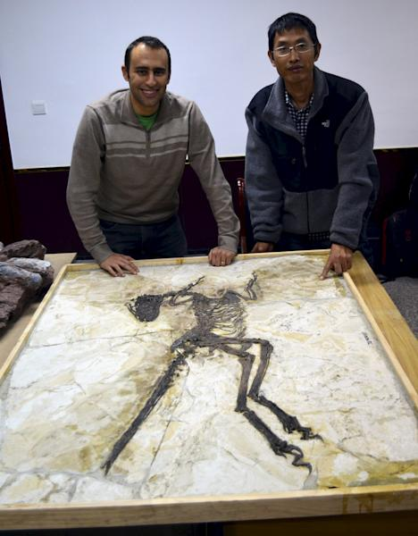 Steve Brusatte and Junchang Lu next to the skeleton of the new short-armed feathered dinosaur Zhenyuanlong suni from the Early Cretaceous (ca. 125 million years ago) of China in this handout photo provided by the University of Edinburgh in Edinburgh, Scotland on July 15, 2015. Scientists have unearthed a spectacularly preserved, nearly complete fossil in northeastern China of a feathered dinosaur with wings like those of a bird, although they doubt the strange creature could fly. The researchers on July 16, 2015 said the fast-running meat-eater was about 6 feet (1.8 meters) long and covered with simple hair-like feathers over much of its body, with large, quill-like feathers on its wings and long tail. REUTERS/Martin Kundrat/University of Edinburgh/Handout via Reuters  ATTENTION EDITORS - FOR EDITORIAL USE ONLY. NOT FOR SALE FOR MARKETING OR ADVERTISING CAMPAIGNS. THIS PICTURE WAS PROVIDED BY A THIRD PARTY. REUTERS IS UNABLE TO INDEPENDENTLY VERIFY THE AUTHENTICITY, CONTENT, LOCATION OR DATE OF THIS IMAGE. THIS PICTURE IS DISTRIBUTED EXACTLY AS RECEIVED BY REUTERS, AS A SERVICE TO CLIENTS. NO SALES. NO ARCHIVES.