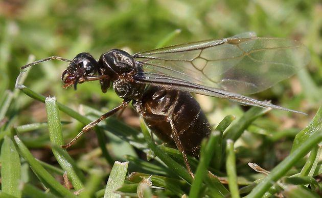Another Flying Ant Day could soon be upon us. (Photo: Philip Toscano - PA Images via PA Images via Getty Images)