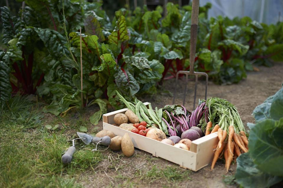 <p>You don't need a lot of space to grow your own vegetables. in fact, some of your fave veggies can be grown in container gardens on a small porch. All you need is some sunshine and a few of the right tools in order to grow your own zucchini, carrots, potatoes or tomatoes in your own backyard (or on your patio). And if you want the proud and successful feeling of starting your vegetables from scratch and you don't have a porch, there are even some indoor options (with the help of some LED lighting) that will help you save a few trips to the farmer's market. </p><p>So avoid the busy crowds at your local garden centers or home improvement stores by snagging these helpful tools off of Amazon. Pretty soon you'll just have to head to your garden for a fresh feast.</p>