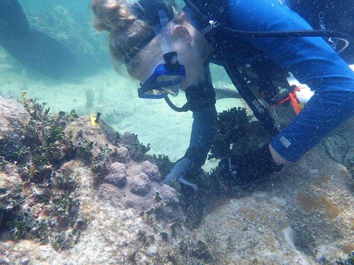 Hanna Koch, a scientist at Mote Marine Laboratory, checks on outplanted mountainous star coral that grew faster than researchers expected in the Florida Keys.