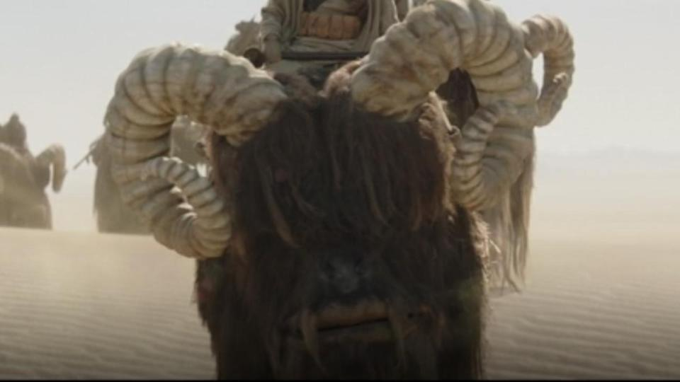 <p> <strong>Episode 1</strong> </p> <p> The horned, hairy mounts used by the Tusken Raiders are treated with reverence on Tatooine. While they're used for travel and other materials, the Raiders won't kill them. So they're probably less than happy that one of their steeds was used as bait for the Krayt dragon. Still, it's good to see these familiar creatures make a return. </p>