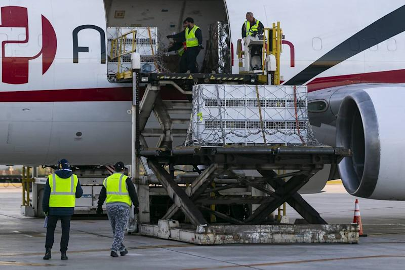 Avianca cargo employees work to offload three Bengal tigers that were rescued from Guatemala at Miami International Airport on Monday, Nov. 25, 2019. Max, Simba and Kimba, who were rescued from a circus in Guatemala by Animal Defenders International, are being sent to an animal sanctuary, Big Cat Rescue, in Tampa.