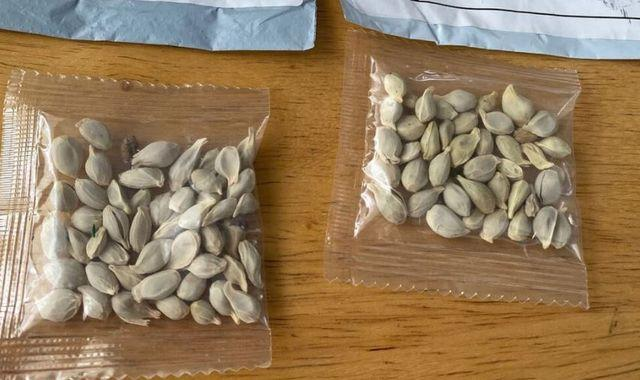 Amazon bans foreign seed sales in US after thousands receive mysterious packages
