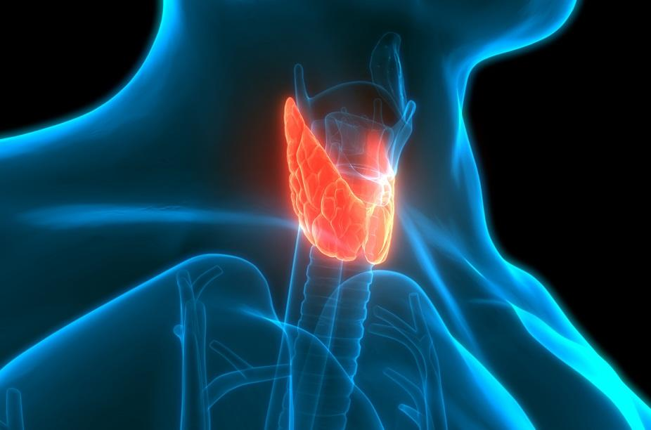 Thyroid, a little butterfly-shaped gland in your neck, is responsible for hormone regulation, metabolism, nervous system health, and more