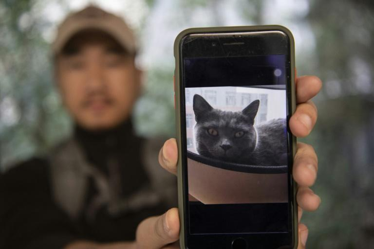 Private sleuth Sun Jinrong brings heat detectors, tiny surveillance cameras, and a blowdart loaded with a tranquiliser to his search for one desperate client's missing loved one: A cat named Duoduo (AFP Photo/NOEL CELIS)