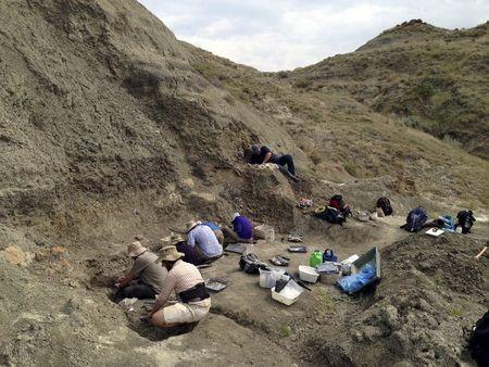 A field crew systematically excavates a bonebed containing the Wendiceratops pinhornenis dinosaur in Manyberries, Alberta in an undated photo released by the Cleveland Museum of Natural History. REUTERS/Michael Ryan/Cleveland Museum of Natural History/Handout via Reuters