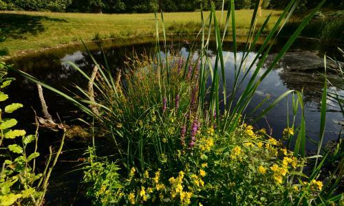 Blasts from the past: how ice age ponds are coming back to life