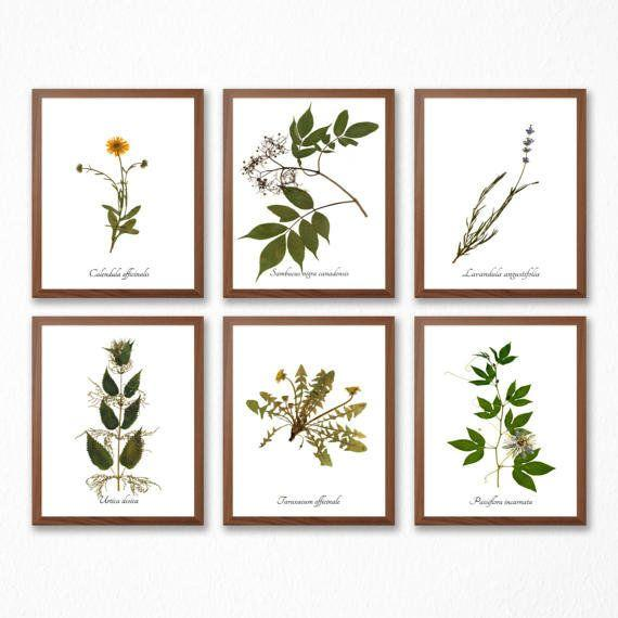 "Get it from <a href=""https://www.etsy.com/listing/505323438/medicinal-herb-print-collection-set-of-6?ga_order=most_relevant&ga_search_type=all&ga_view_type=gallery&ga_search_query=herbariums&ref=sc_gallery-1-2&plkey=18fc1ac01752fd8ac48e747a5d46cc56b5faf8d8:505323438"" target=""_blank"">Ecobata on Etsy, $50+</a>."