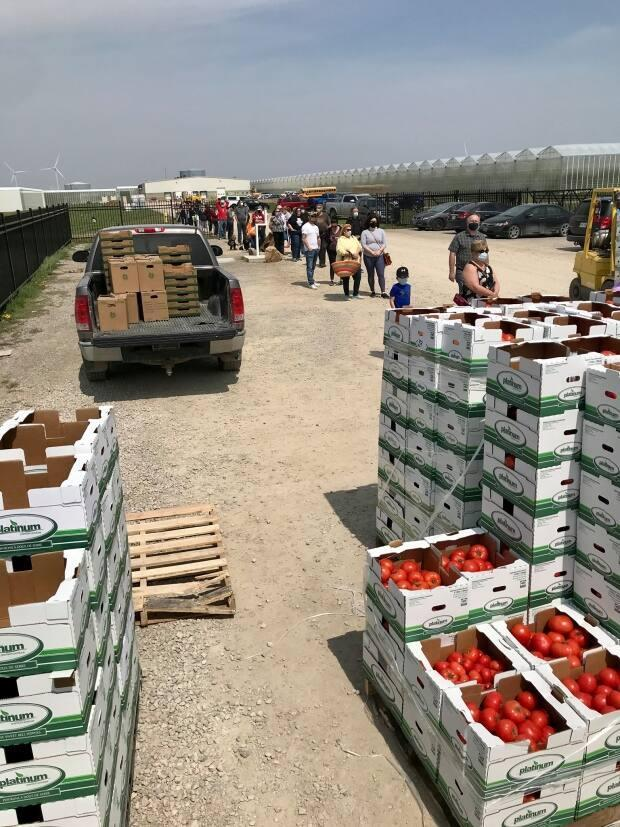 Line up for tomatoes at Platinum Produce in Blenheim.