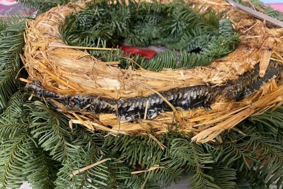 Snake was curled up in 'natural' wreath (Karl Gaskell / SWNS)