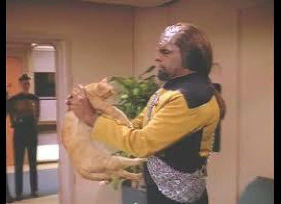 Cat: Not Klingon's Best Friend (Via <span>Fan Forum</span>)